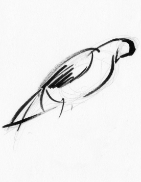 """Pigeon"" Ink on paper 5""x7"" (2008)"